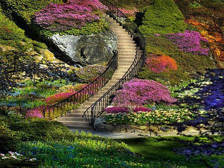 به گزارش آکاایران: به گزارش ایران ناز باغ بوچارت یکی از جاذبه های گردشگری پرطرفدار در کانادا محسوب میشود. پرسنل این باغ زیبا با توجه به فصل بین ۲۹۰ تا ۵۵۰ نفر متغیر میباشد.  باغ بوچارت (Butchart Garden) واقع در ایالت بریتیش کلمبیا شهر ویکتوریا، کانادا یکی از بزرگترین باغ گلهای طبیعی دنیاست.  […]