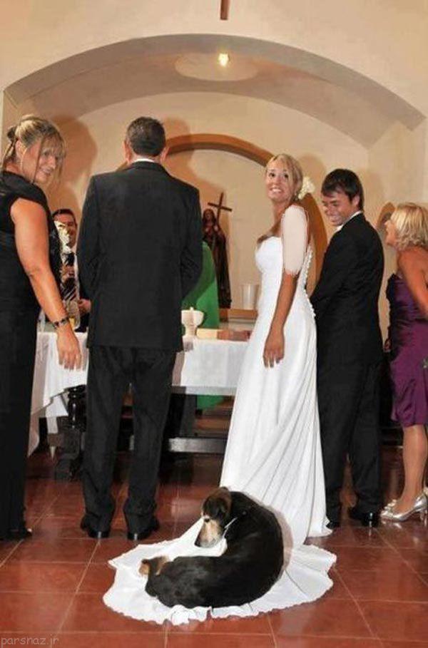 عکس های خنده دار از مراسم عروسی مجموعه : گالری عکس های خنده دار عکس های خنده دار از مراسم عروسی عکس های خنده دار و بامزه از مراسم های عروسی در سراسر جهان پیش روی شماست. عکس خنده دار مراسم عروسی خنده دار عکس عروسی خنده دار عکس عروسی طنز عکس عروسی طنز و […]